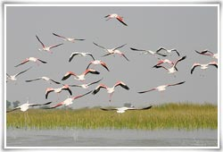 Nal Sarovar Bird Sanctuary